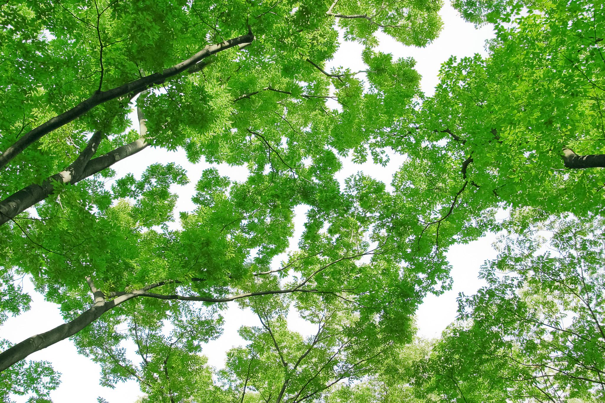 「沢山の緑の葉とつけた枝」の素材を無料ダウンロード
