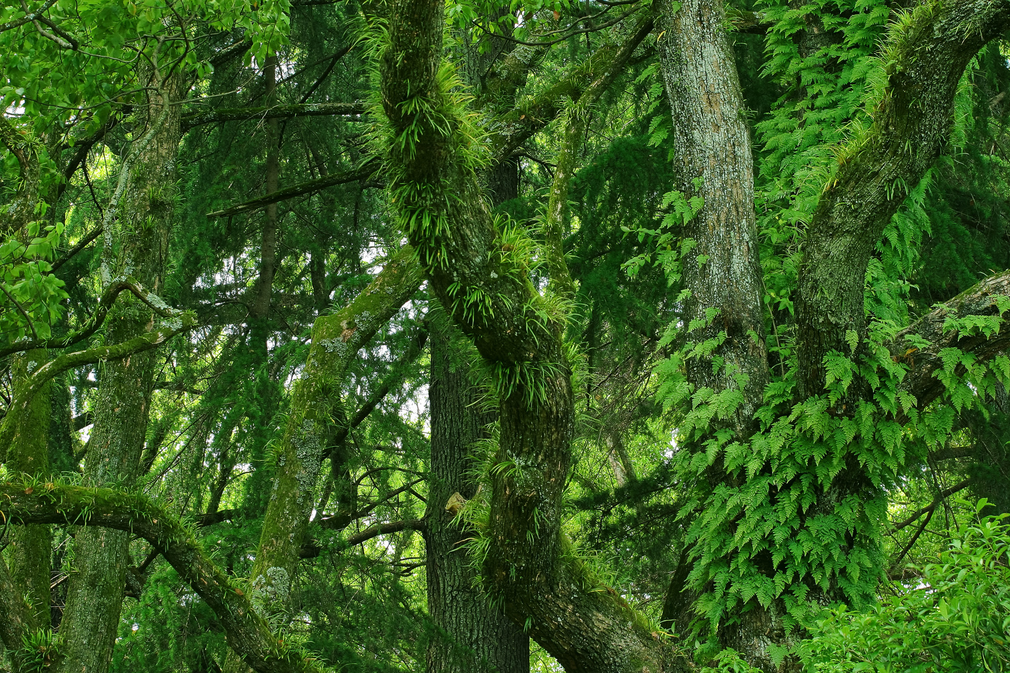 「鬱蒼とした草木生える樹海」の素材を無料ダウンロード