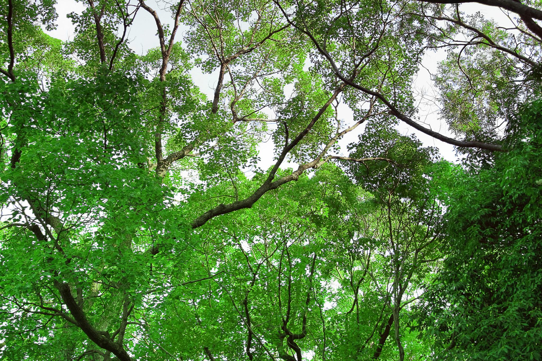「緑の木の画像」