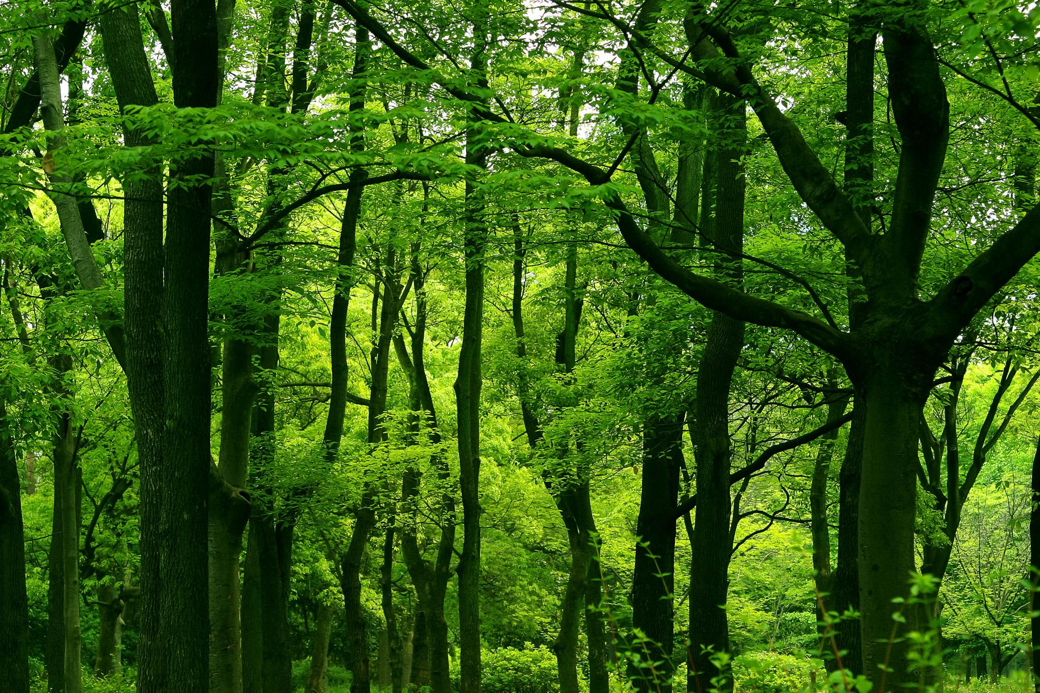 「光浴びる鮮やかな緑と幹のコントラスト」