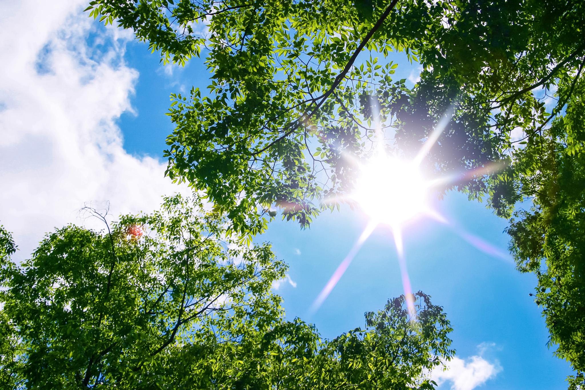 森の中から見上げる太陽