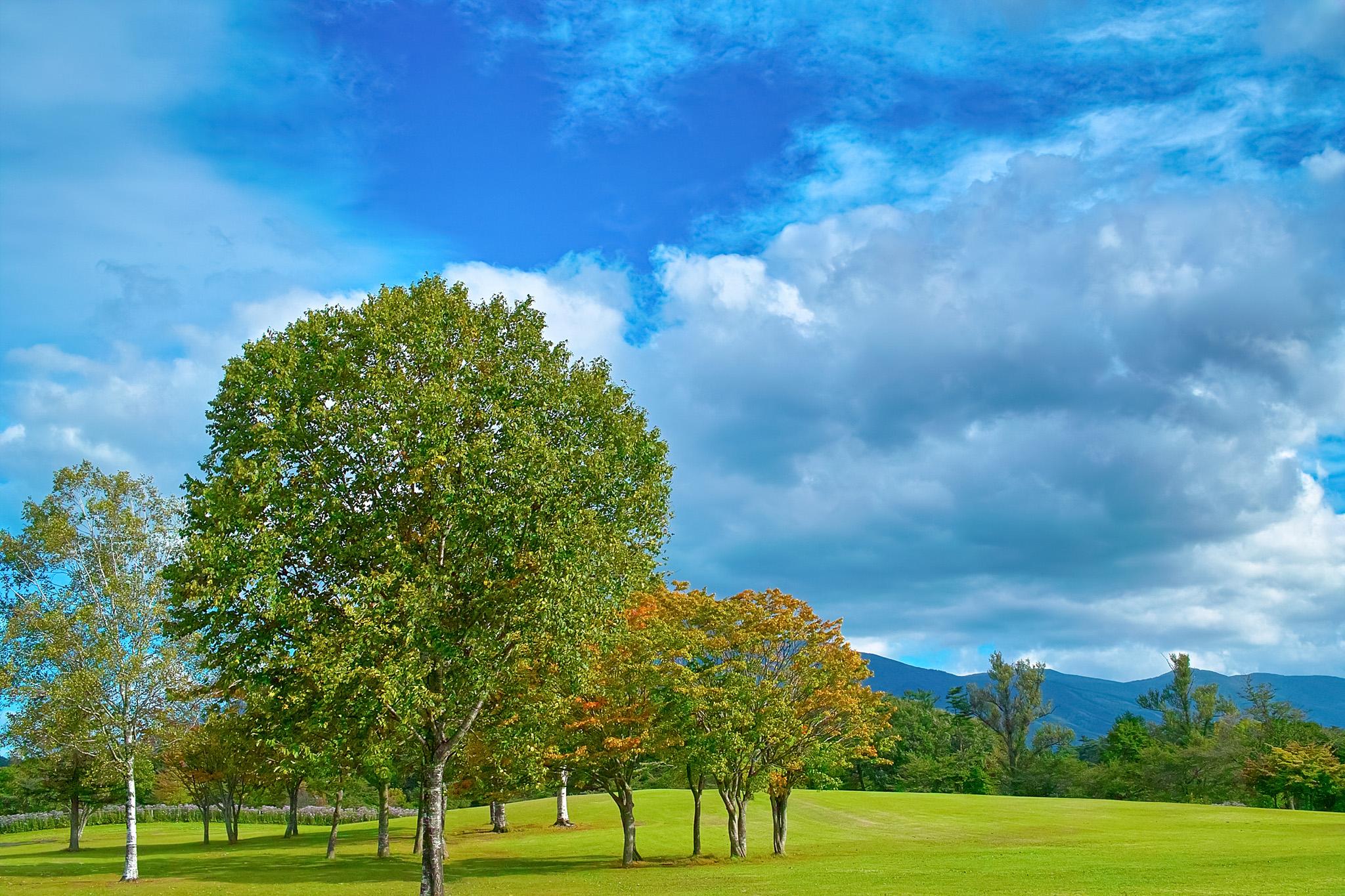 「緑の丘の小さな木立」の画像を無料ダウンロード