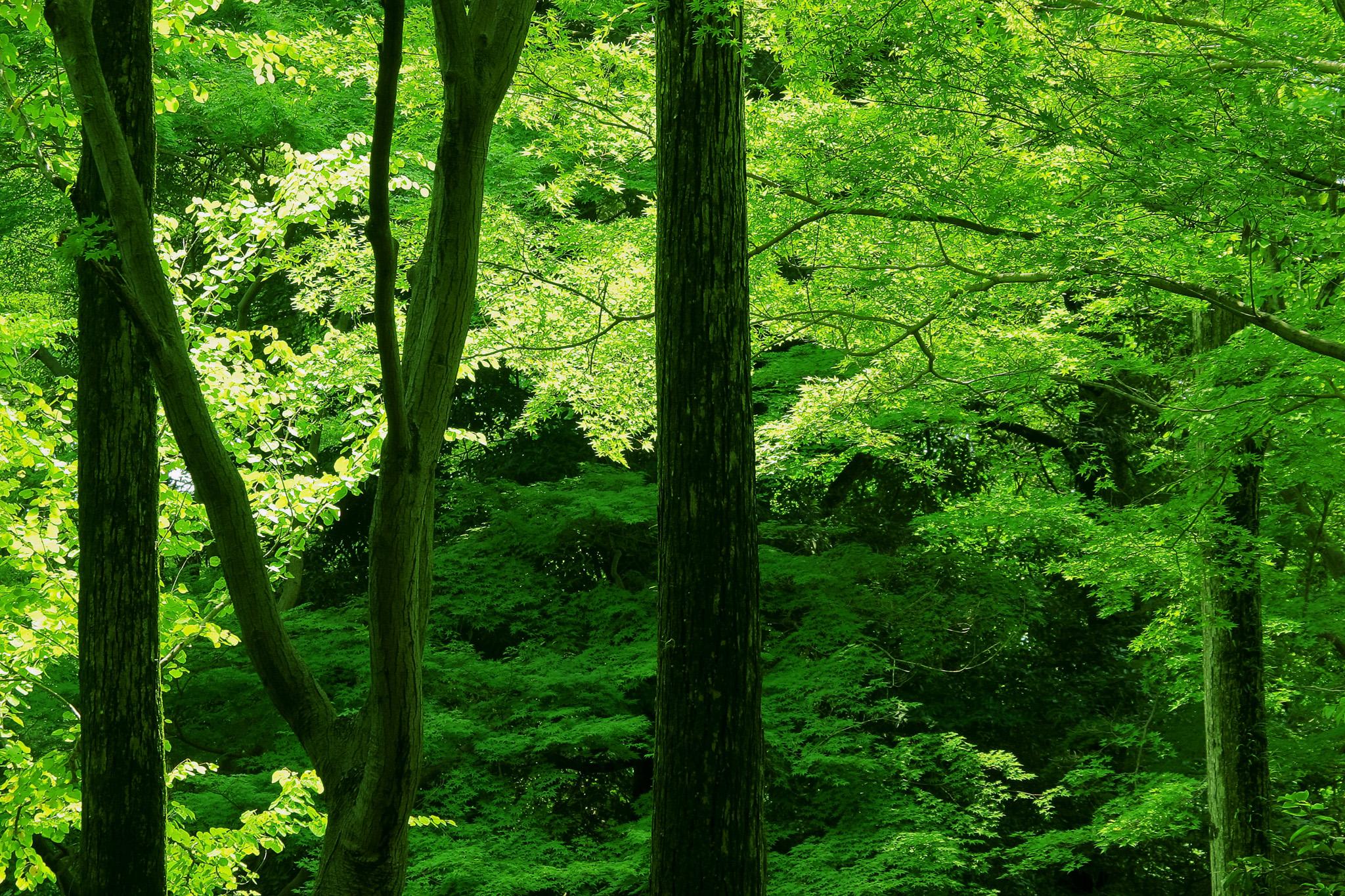 緑が輝く初夏の光