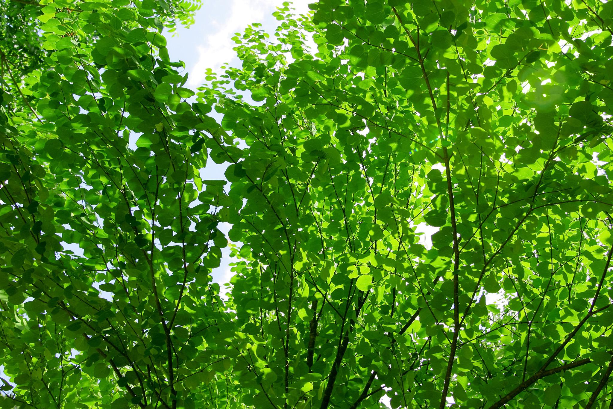 「光に輝く緑の葉」