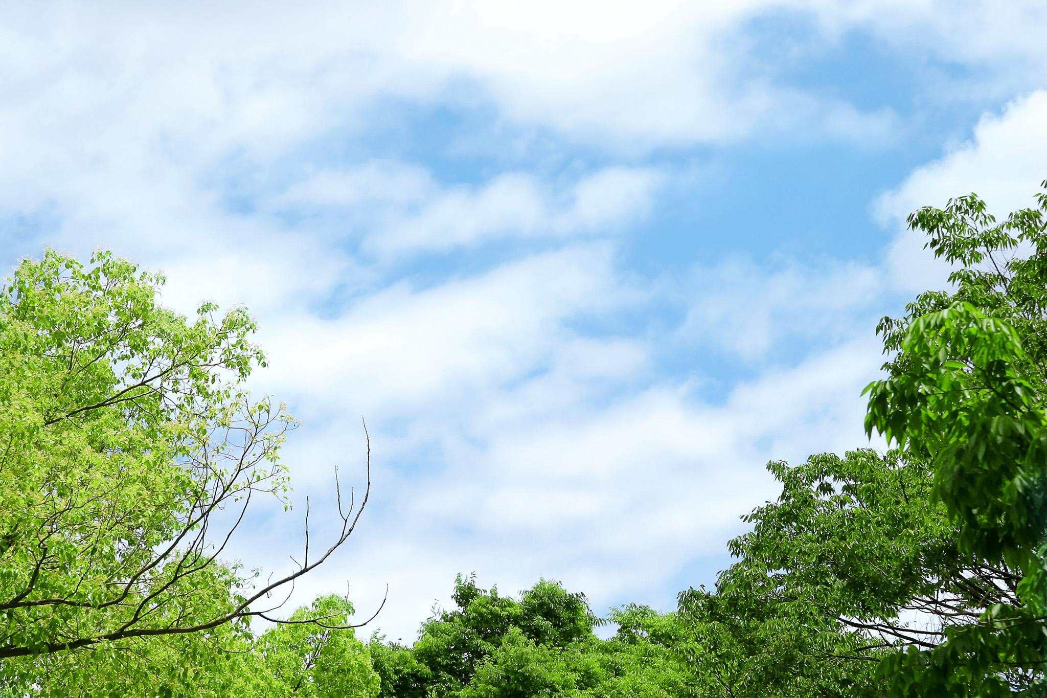 「新緑の木々と穏やかな空」