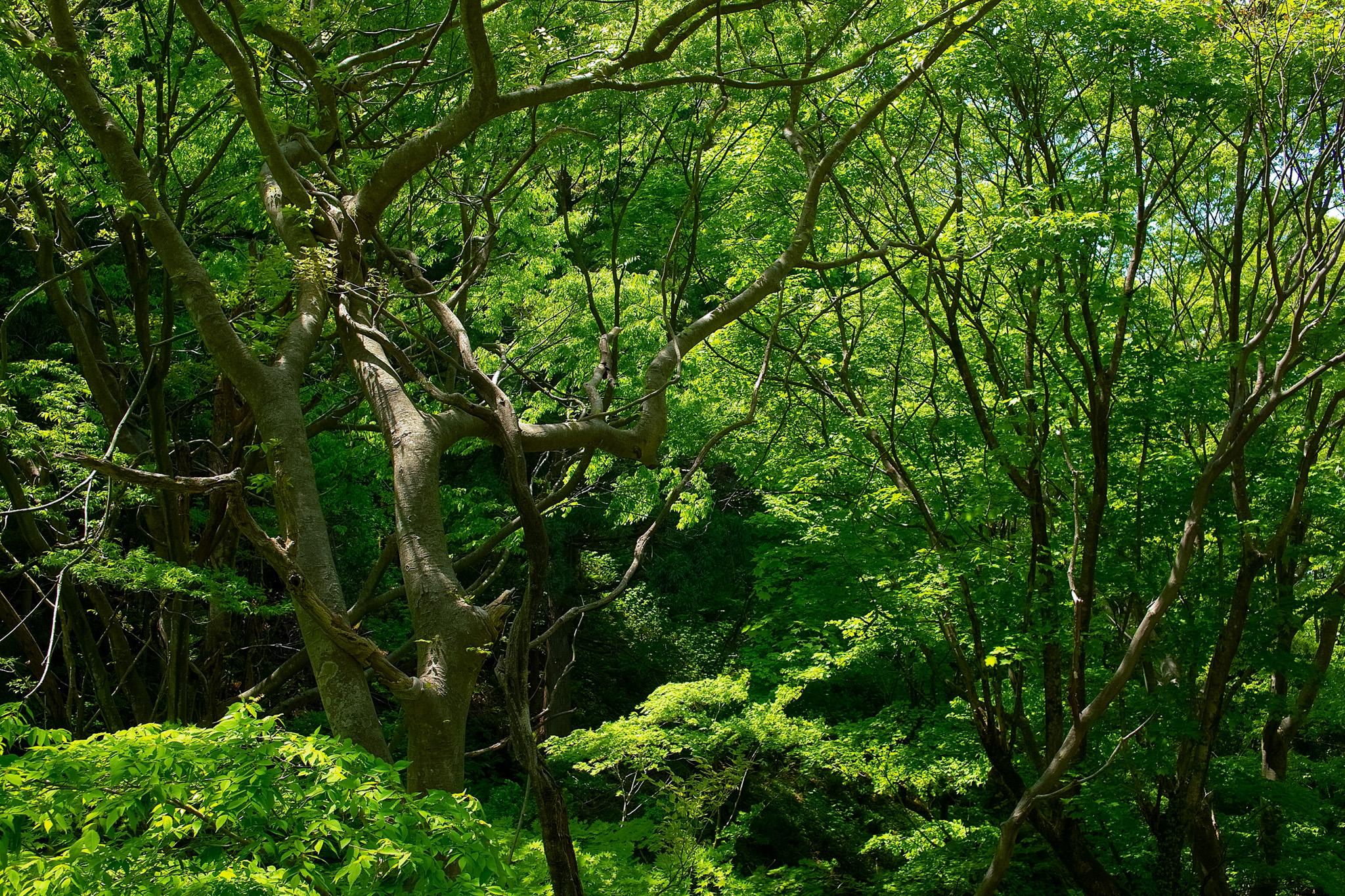 「緑の樹木が生い茂る林」