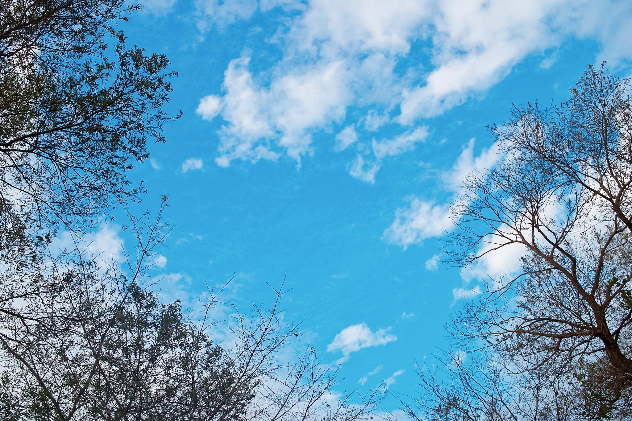 木の葉が散った冬の訪れ