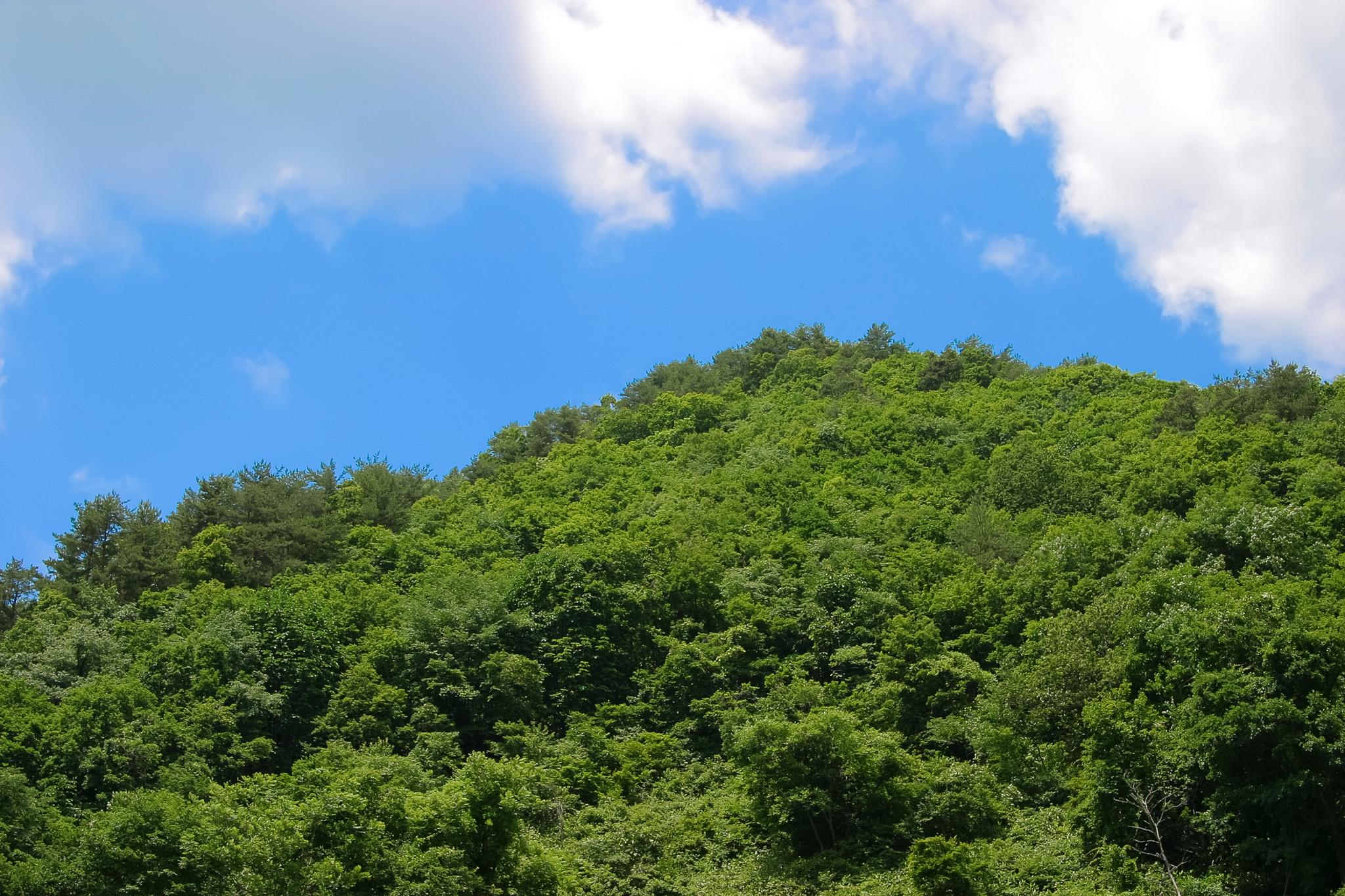 萌える緑の小山