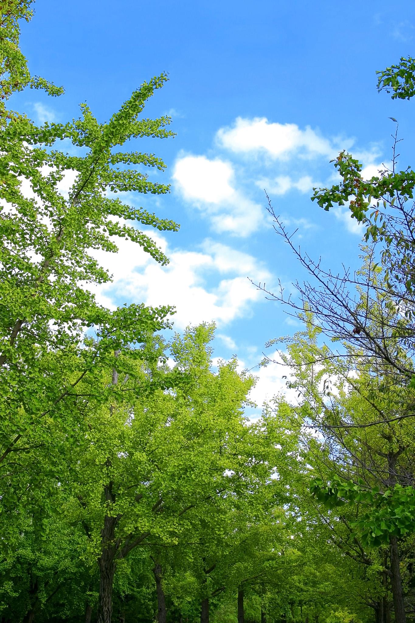 「木・樹木」の素材を無料ダウンロード