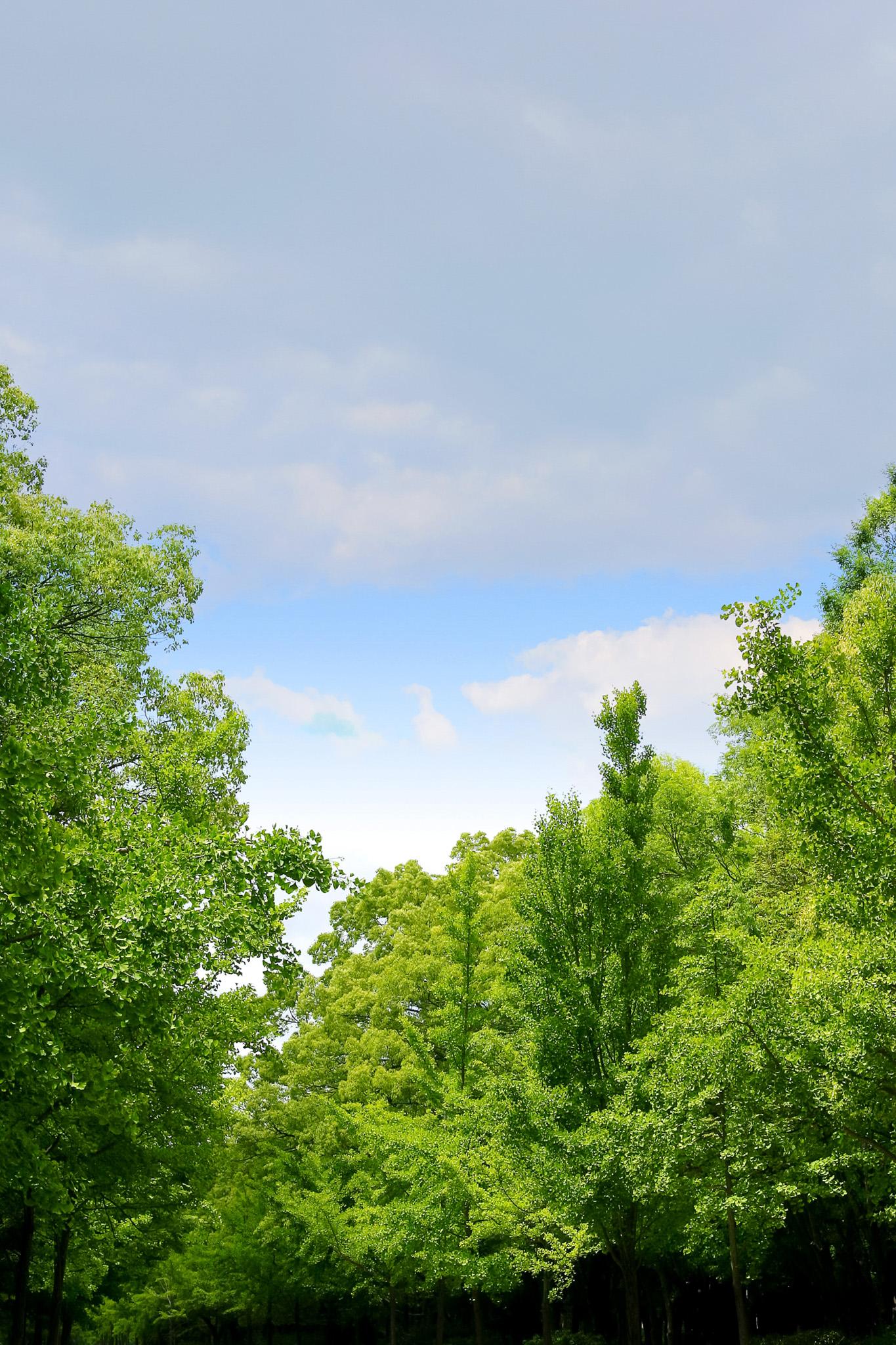 「四季の樹木」の素材を無料ダウンロード