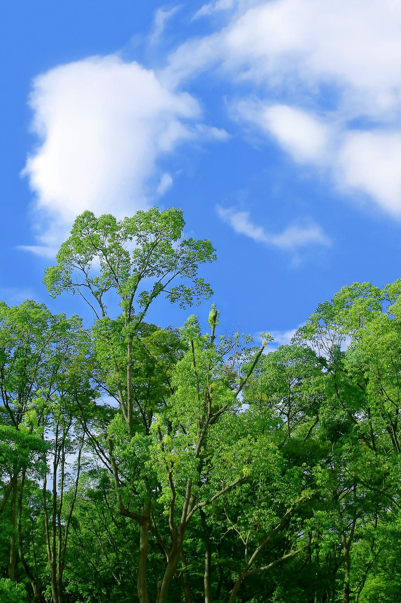 「森林」の素材を無料ダウンロード