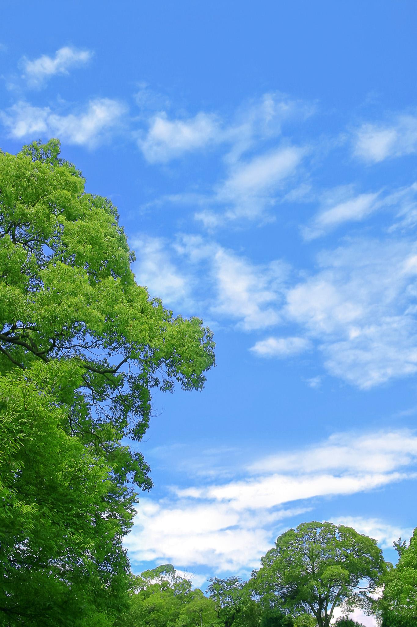 「緑と紅葉の木々」の素材を無料ダウンロード