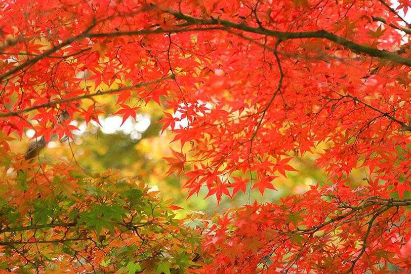錦秋の紅葉の写真画像