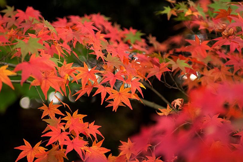色絵錦のような和風の紅葉の写真画像