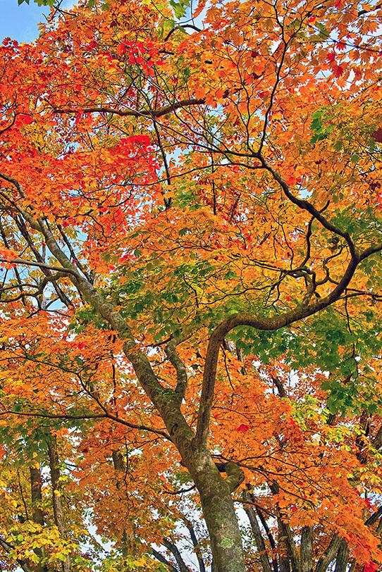「美しい紅葉」の写真素材を無料ダウンロード