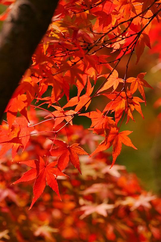 美しい紅葉の写真画像