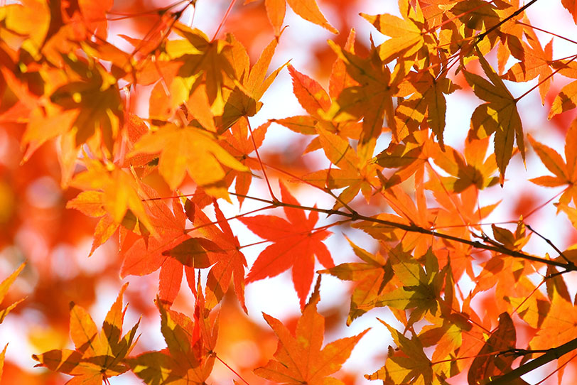 紅葉風景の写真画像