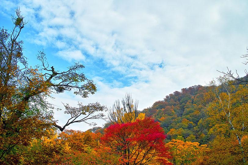 モミジの景色の写真画像