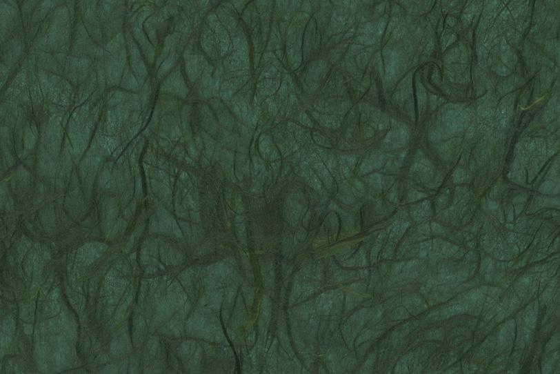 無数の蔦が這うような雲龍和紙の写真画像