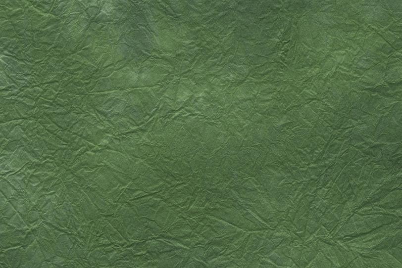 葉脈の似た模様の虫襖色揉染和紙の写真画像
