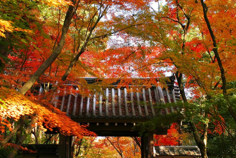 紅葉が鮮やかな京都の寺院の写真画像