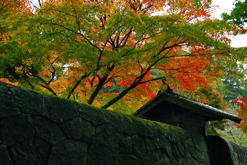 和の風景素材の写真画像