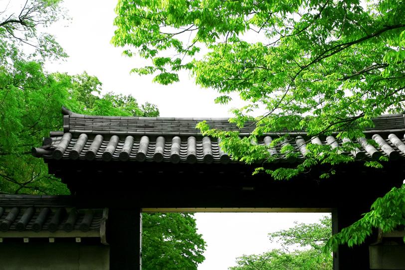 新緑の京都の写真画像