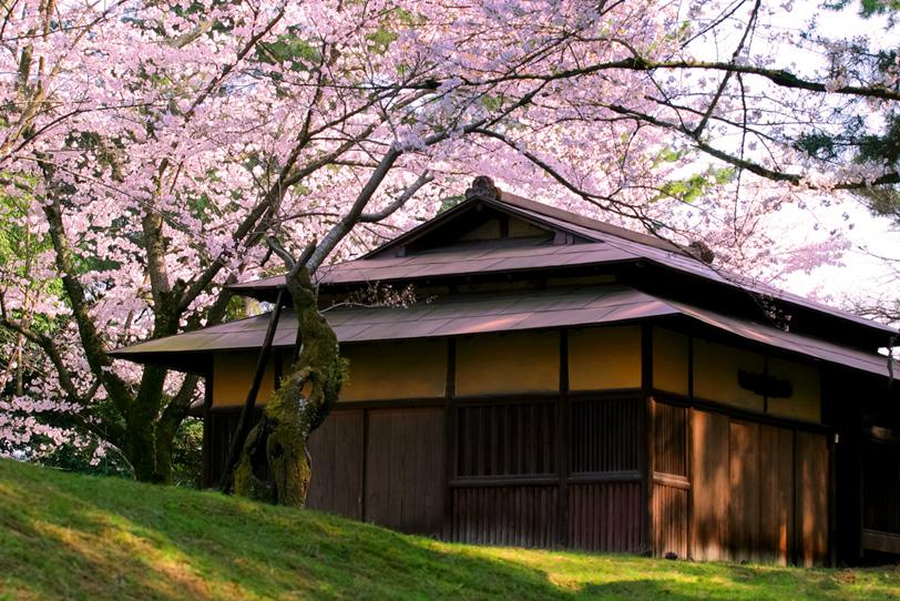 春の桜と古民家の写真画像