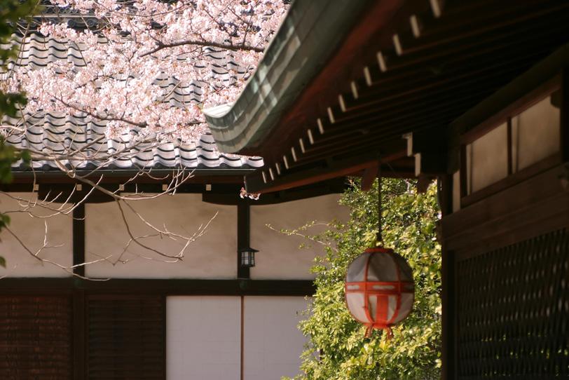 桜の季節の京都の写真画像