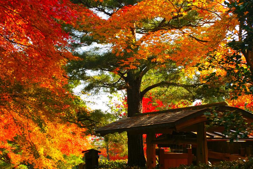 紅葉する古都の秋の写真画像
