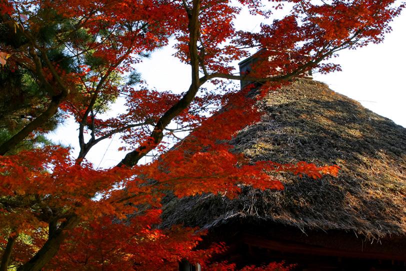 紅葉と茅葺の家の写真画像