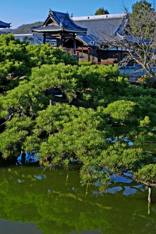 池と松と日本寺院の写真画像