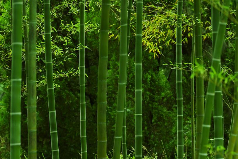 和の静寂を感じる竹林の写真画像