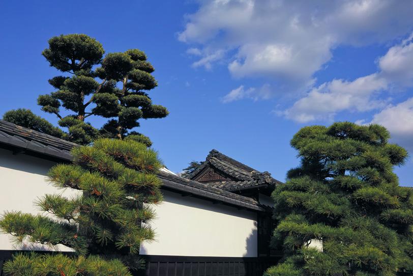 白壁と松がある日本家屋の写真画像