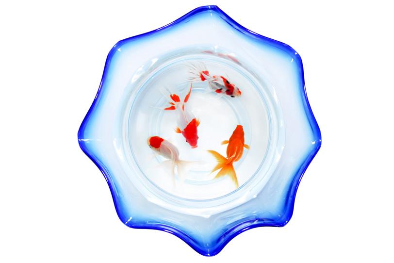 金魚鉢の中を泳ぐ琉金の写真画像