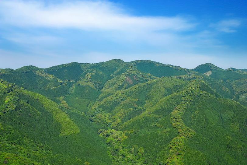 木々の命みなぎる若草色の山の写真画像