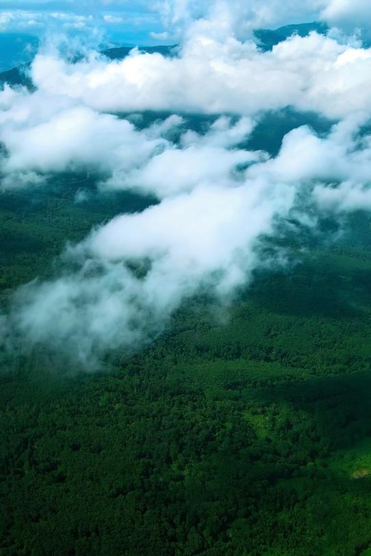 雲の下に見える広大な森の写真画像