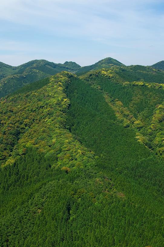 新緑が溢れる山腹の景色の写真画像