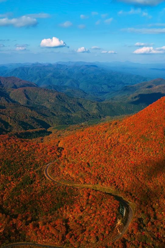 紅葉する山を縫う道の写真画像