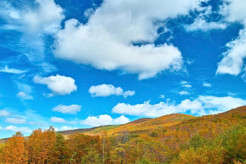 穏やかな秋の日の黄色い山の写真画像