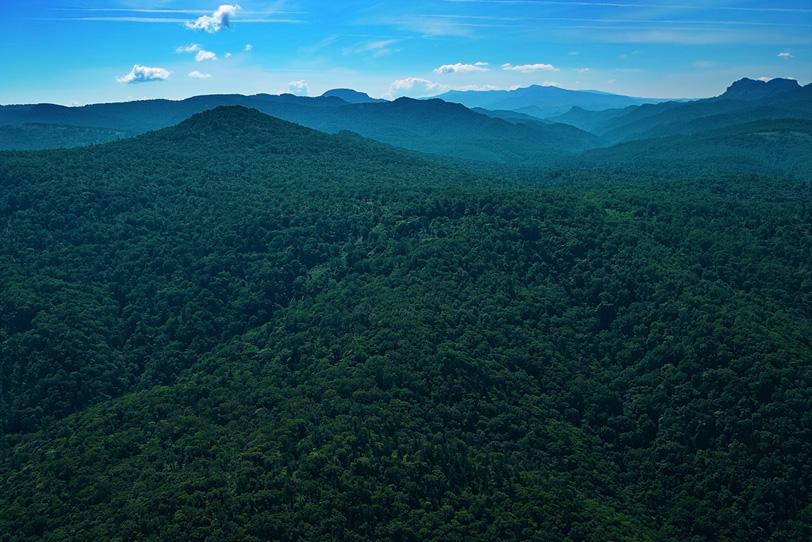 木が生い茂る深い山の写真画像