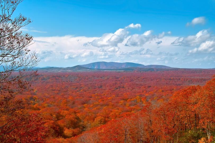 遥かに続く紅葉の森と山の写真画像