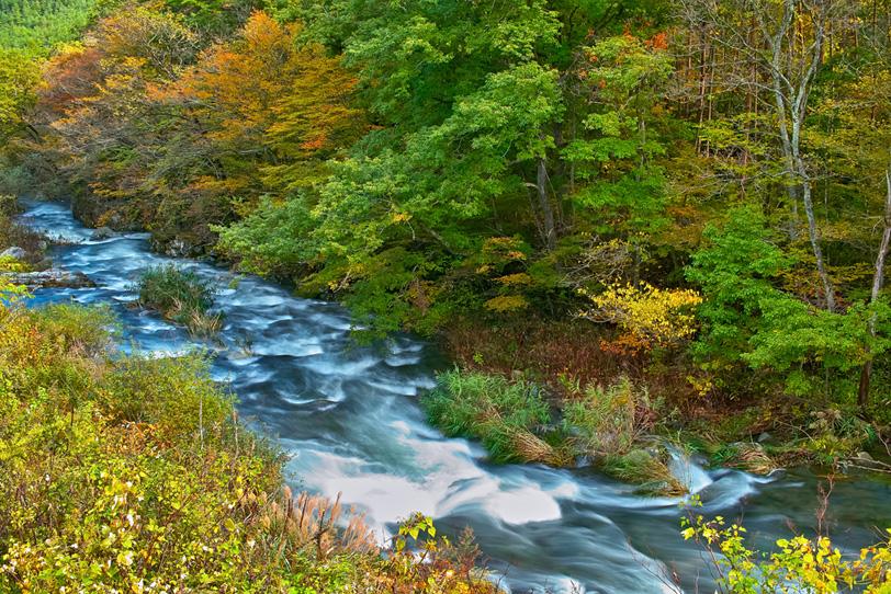 赤く色づき始めた林の中を流れる川の写真画像