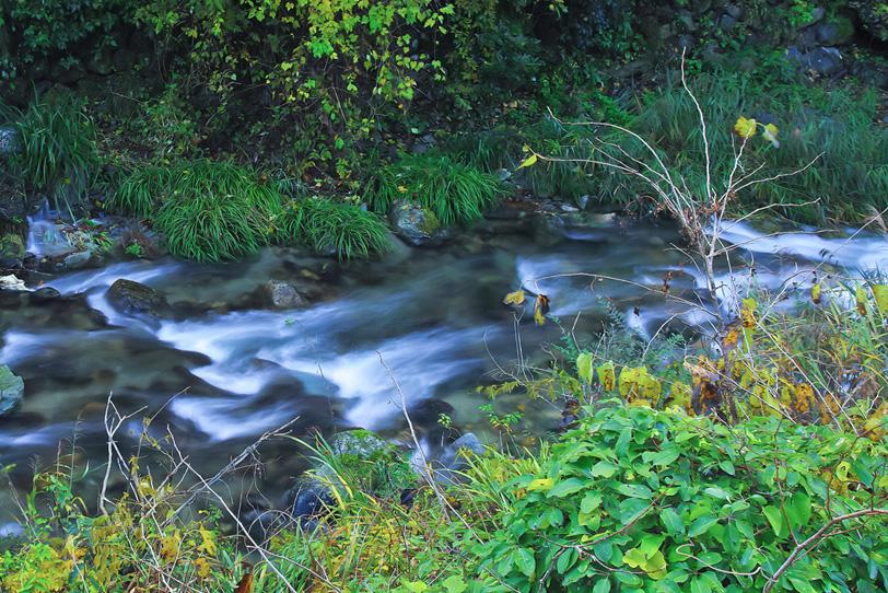 綺麗な水が流れる小川の写真画像