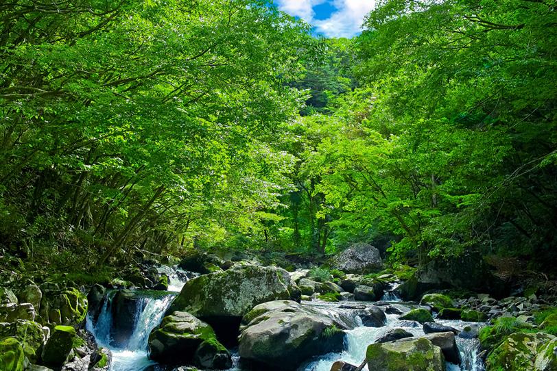緑あふれる林の中を流れる夏の清流の写真画像