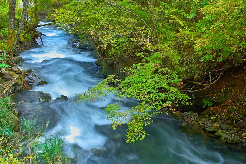 流速が激しい上流の川の写真画像