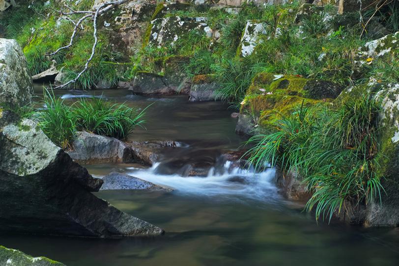静寂な山の中を流れる小川のせせらぎの写真画像