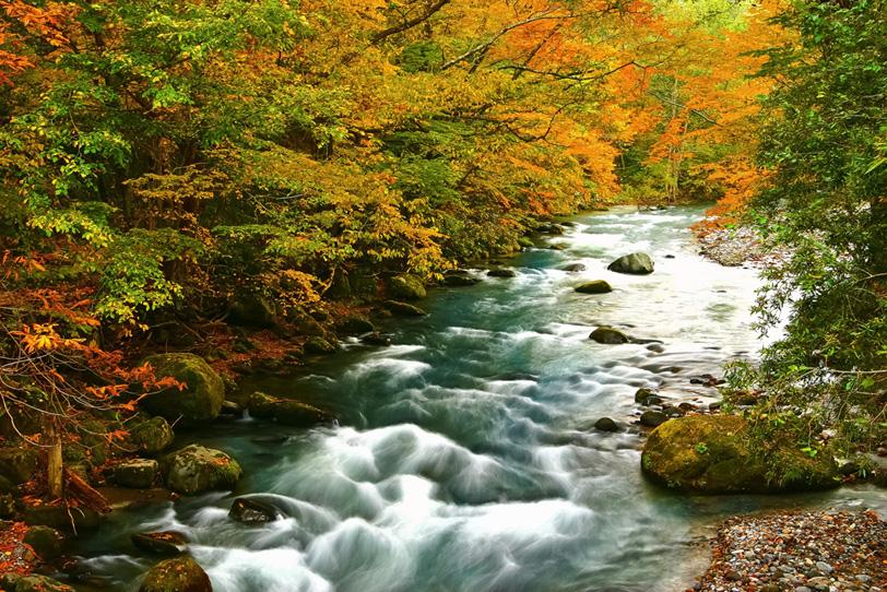紅葉と渓流の写真画像