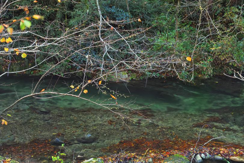 透明な水と落葉積もる川瀬の写真画像