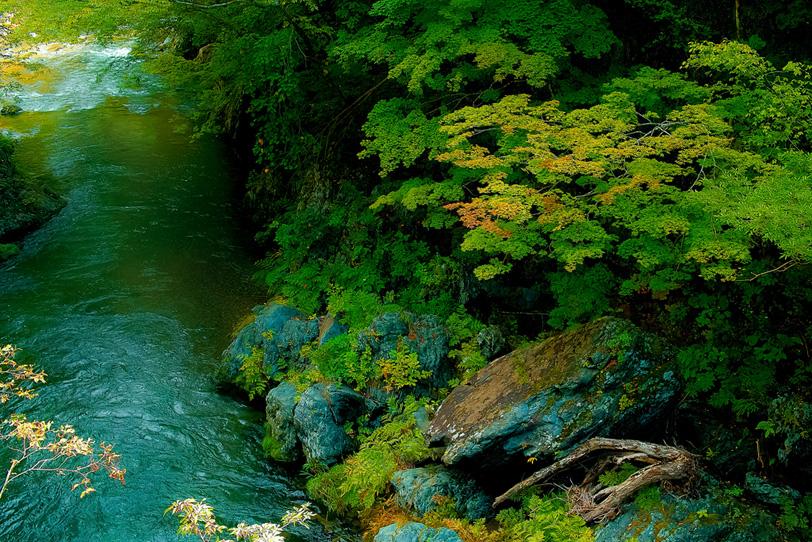 「緑の木々がある谷の清流」の素材を無料ダウンロード
